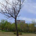 Park muzej 13