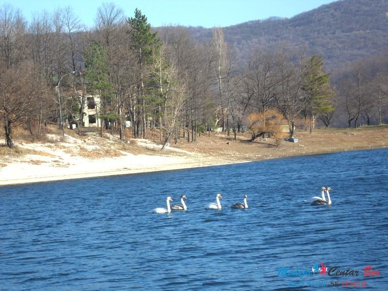 Jezero labudovi 3
