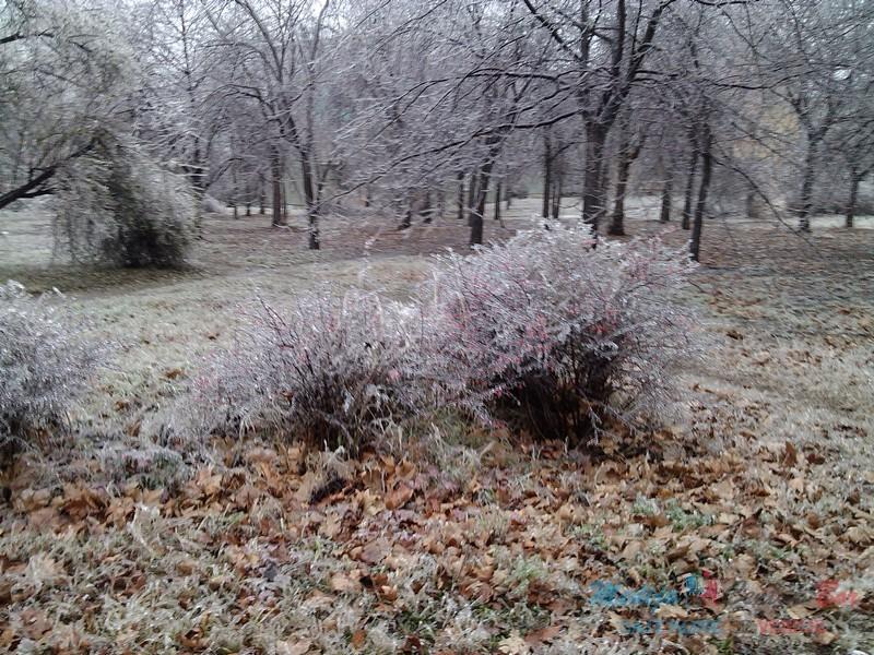 Zima u Boru 01